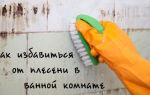 Как уничтожить плесневый грибок в ванной комнате