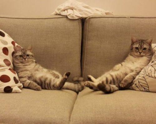 Народные и промышленные методы избавления от запаха кошачьей мочи