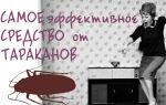Топ-10 эффективных средств от тараканов