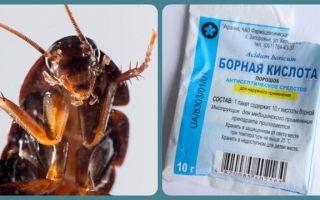Выведение тараканов борной кислотой