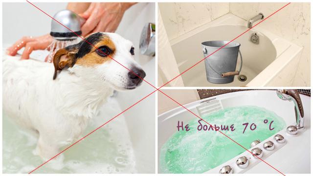 Собака, ведро, горячая вода в ванной