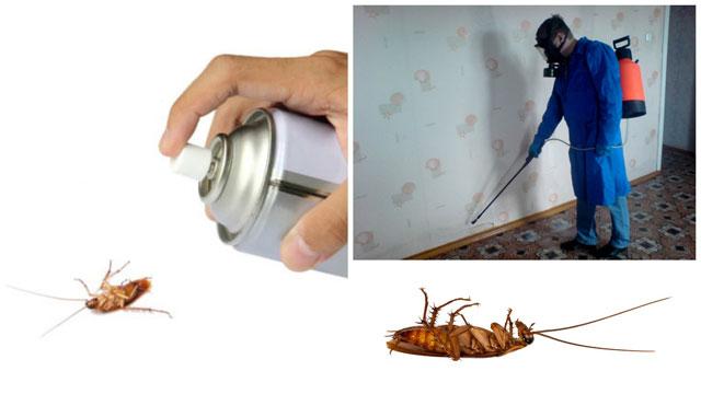 Отравляем тараканов всеми возможными способами