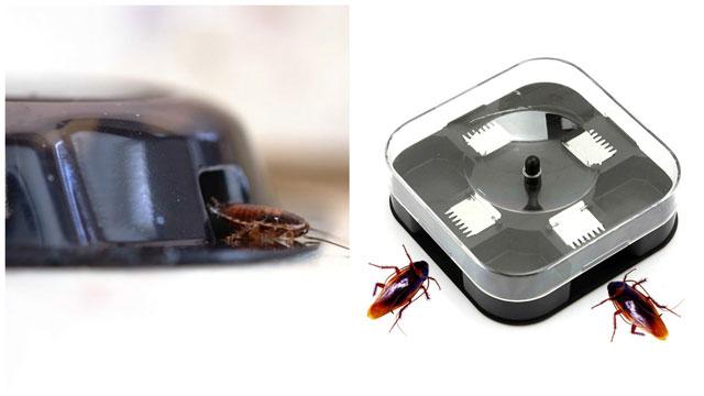 Тараканы попадают в ловушку