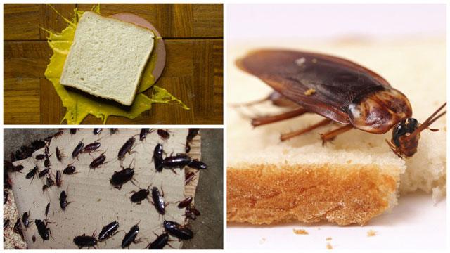 Тараканы любят бутерброды с колбасой