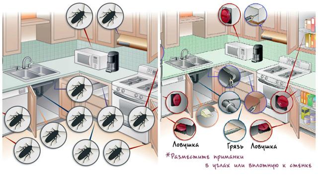 Векторный план кухни