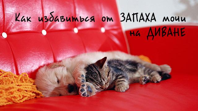 Домашние животные спят на мягкой мебели