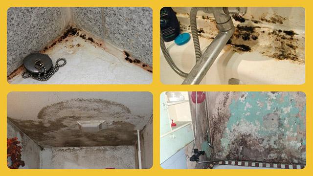Ванная комната и плесень