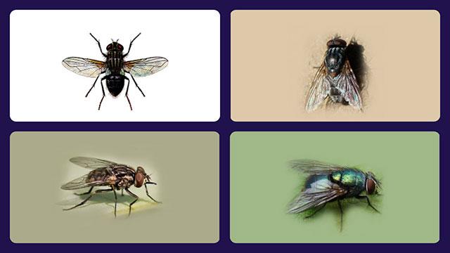 4 вида мух