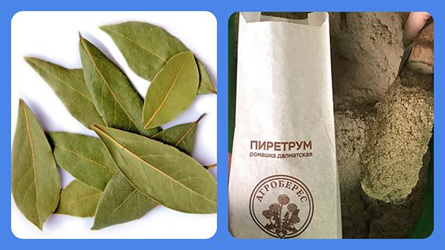 Лавровый лист и пиретрум