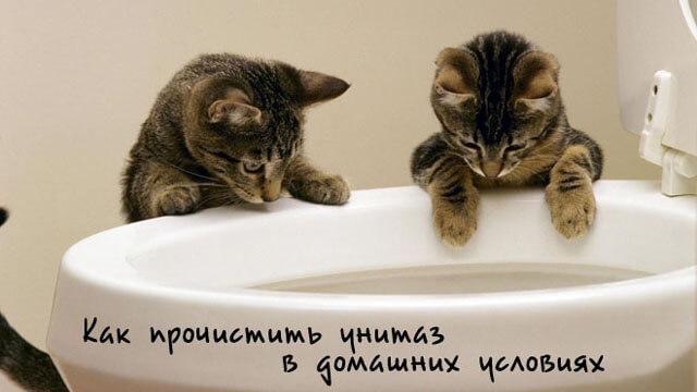 Два кота смотрят в унитаз