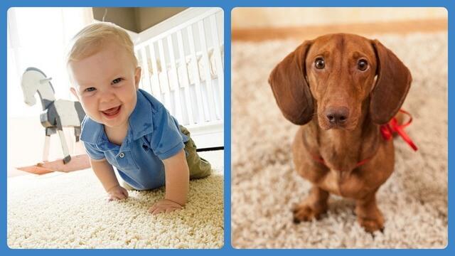 Ребёнок и собака на ковре